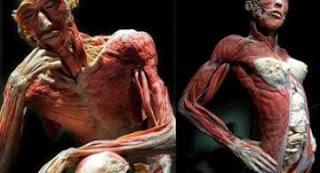 Guía de Ayuda para el estudio de la Anatomía Humana