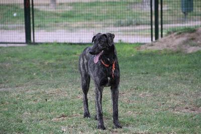 Bruma Villa EDUCAN Alicante Adiestramiento canino a domicilio