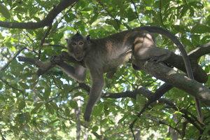 A monkey at Lâm Viên park