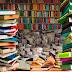 Carrera de literatura de la UMSA: la generación del fracaso