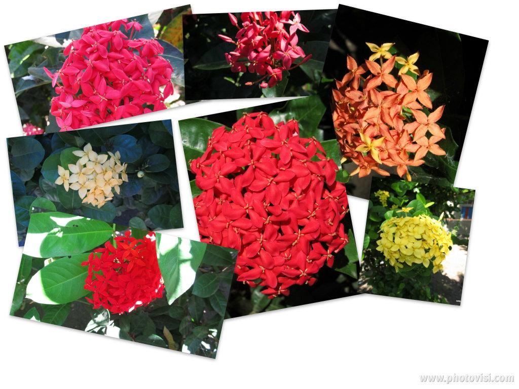 http://1.bp.blogspot.com/-7laxpivX2D0/TvvZKldFtiI/AAAAAAAADP4/NUL5302dZks/s1600/0e17a285-c7f4-467d-90d5-2ae80b756962wallpaper.jpg
