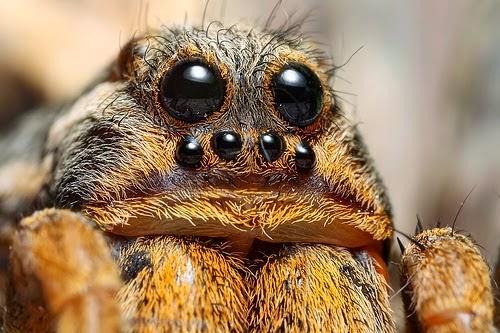 Jenis serangga paling seram di dunia