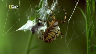 Download – Aranhas Incríveis – HDTV Dublado