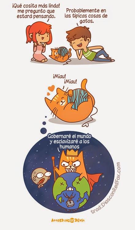 ¿En que piensan los gatos?