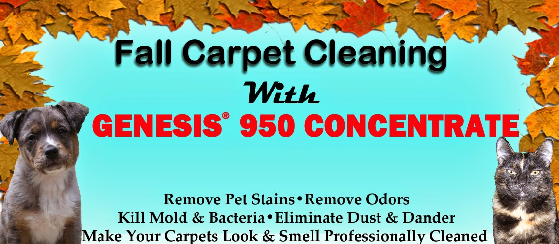 Best Carpet Cleaning Shampoo