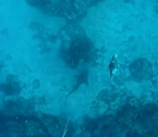 Shark swims away after attacking diver spearfisherman