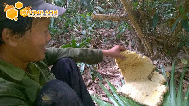 Bán mật ong rừng 100% - 12