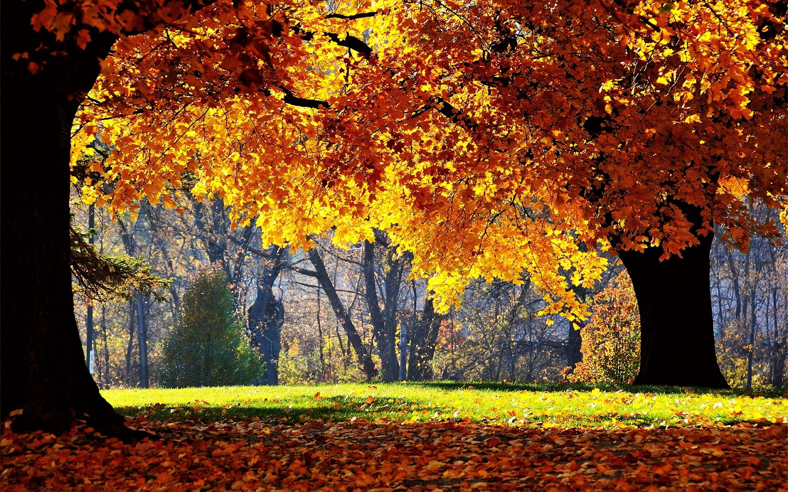 http://1.bp.blogspot.com/-7ngiHByu3mc/T-tAor9Rq2I/AAAAAAAAAWk/aMo4hSmcduw/s1600/park-tree-autumn-leaf-forest-nature.jpg