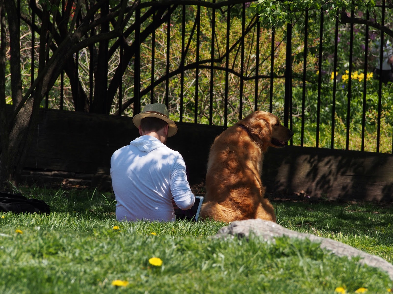 Best Friends #BestFriends #dog  #NYC #CentralPark #mansbestfriend #frombehind 2014