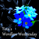 Tina&#180;s wordless wednesday