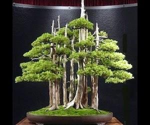 """<img src=""""bonsai4.jpg"""" alt=""""foto bonsai"""">"""