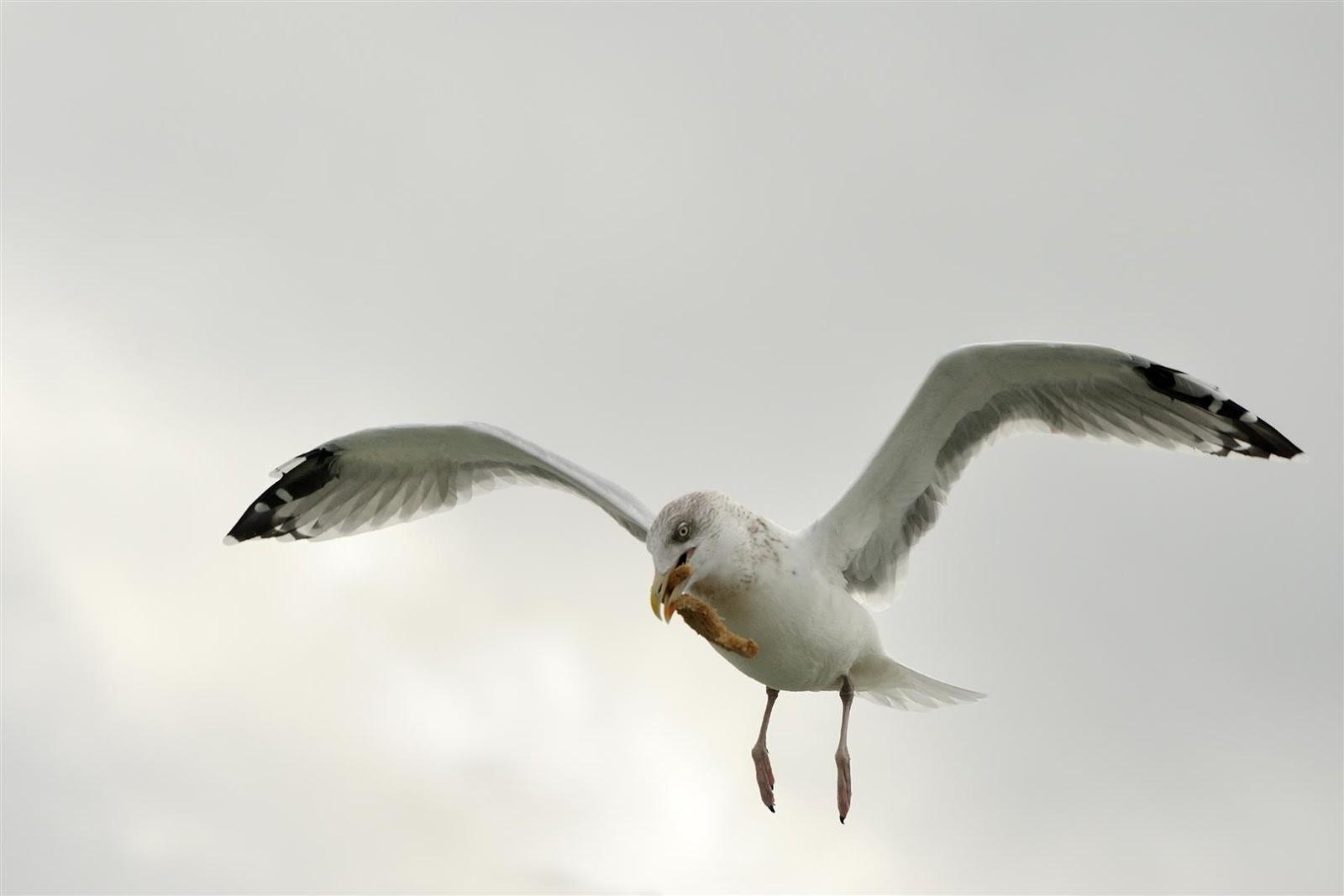 Gonnie van de schans ter land ter zee en in de lucht - Schans handig ...