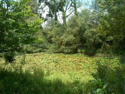 Blog do professor marciano dantas os grandes dom nios naturais - Enorme terras ...