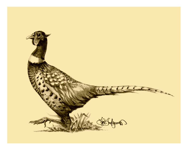 pheasant drawing