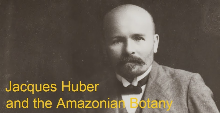 Jacques Huber and the Amazonian Botany