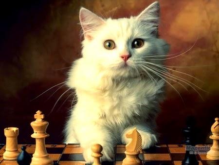 cara belajar bermain catur gampang dengan aplikasi software