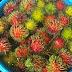 Tips Hilangkan Semut Dari Rambutan