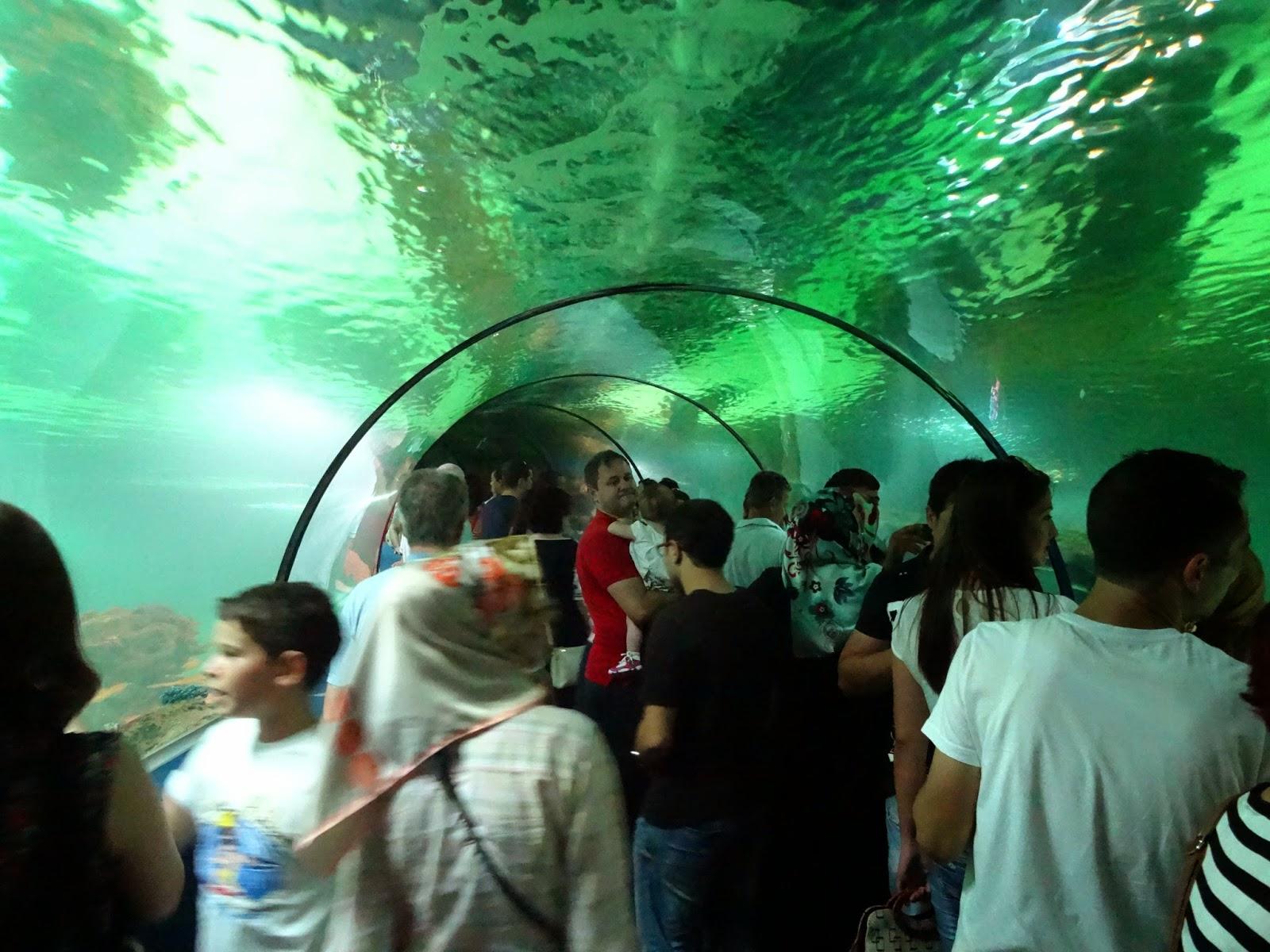 Tesisi gezenler bir taraftan köpekbalığı vatoz gibi derin deniz
