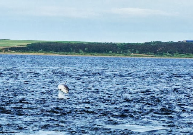 Avistamiento de delfines en Chanonry Point