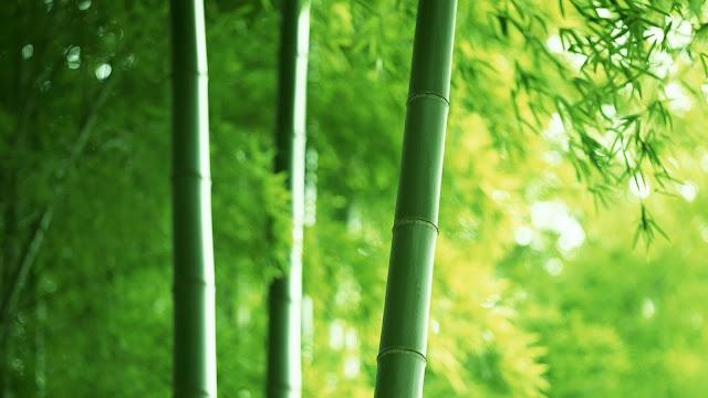 Bamboo Nature5
