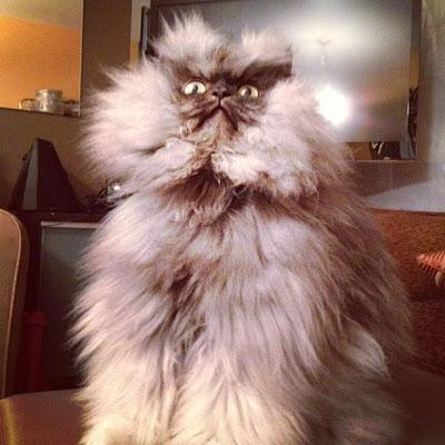 Kucing-kucing paling terkenal di internet (Colonel Meow)