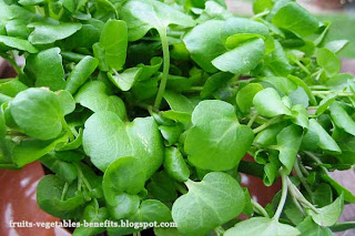 benefits_of_eating_watercress_fruits-vegetables-benefits.blogspot.com(4)