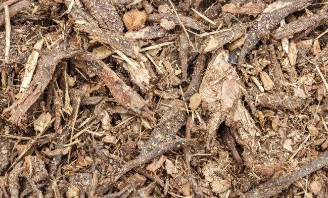 Ser bueno o malo dejar las hojas ca das en el c sped for Como cuidar el pasto