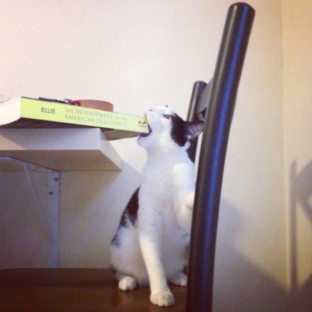funny cat pictures, cat bites book