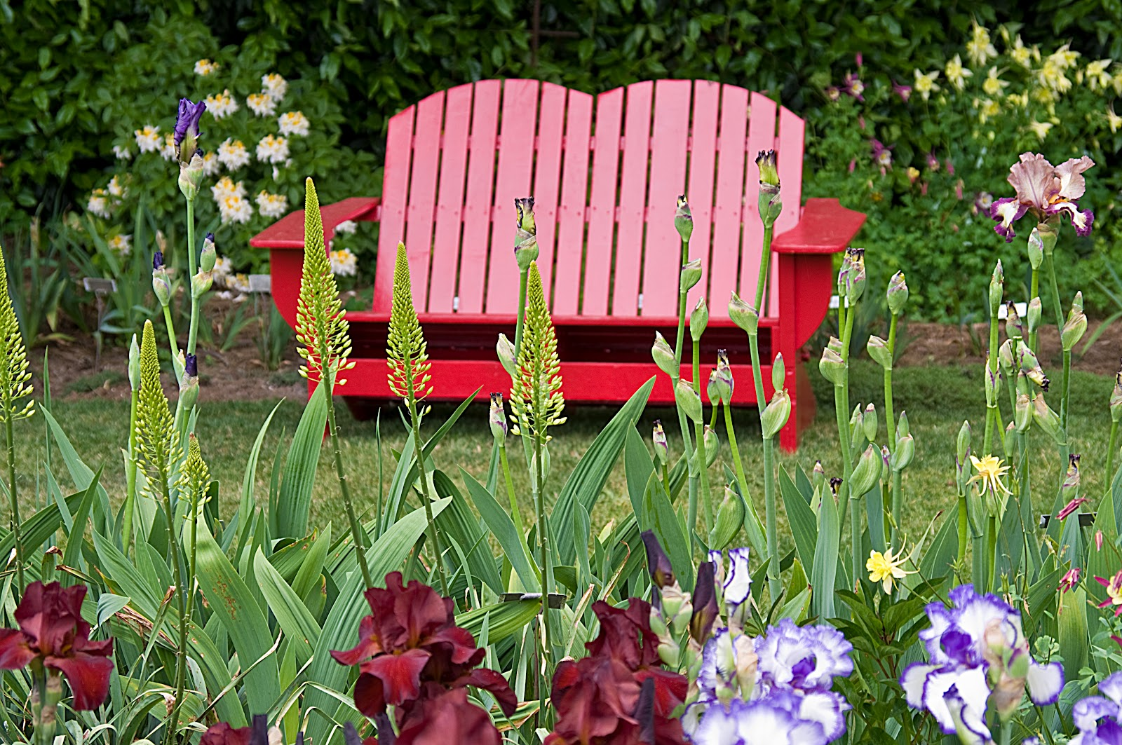 My Oregon Photography Schreiner 39 S Iris Gardens Two