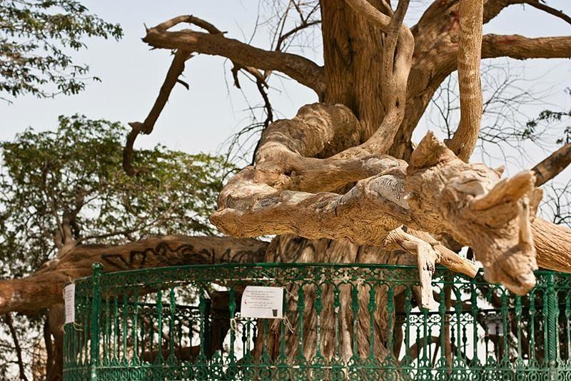 Tree of Life, Bahrain | Shajarat-al-Hayat
