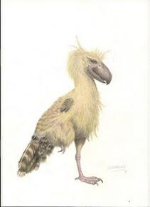 Aves Fósseis do Brasil