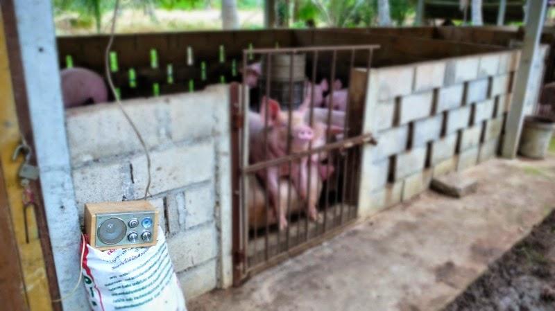 Ban Krut Schweinestall