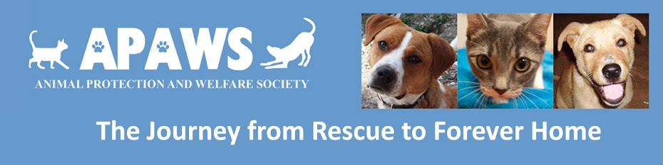 APAWS: The Journey from Rescue to Forever Home