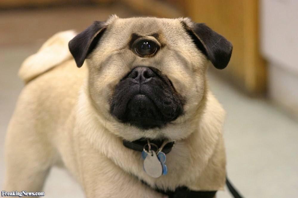 Dog Big Eyes Gif