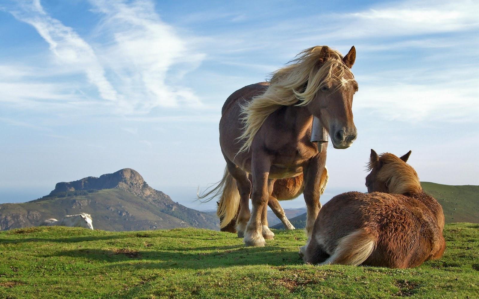 Wonderful   Wallpaper Horse Pinterest - hd+horse+wallpaper  Best Photo Reference_132674.jpg