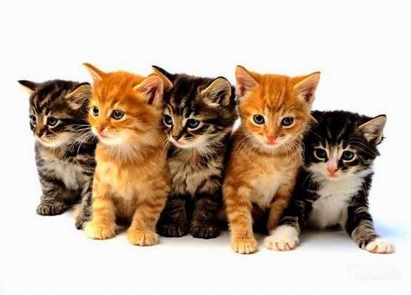 Keistimewaan Kucing dan Fakta Ilmiah
