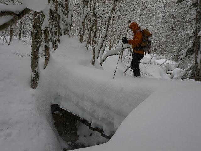 Candanchu-Bosque de Sansanet