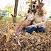 Adorável cão invade e transforma com diversão as fotos de noivado de sua dona