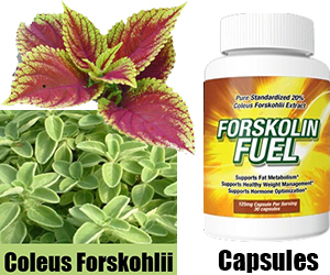 Pure natural forskolin does it work