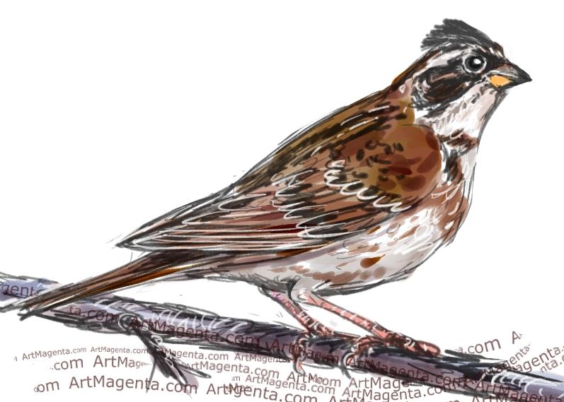 En fågelmålning av en videsparv från Artmagentas svenska galleri om fåglar