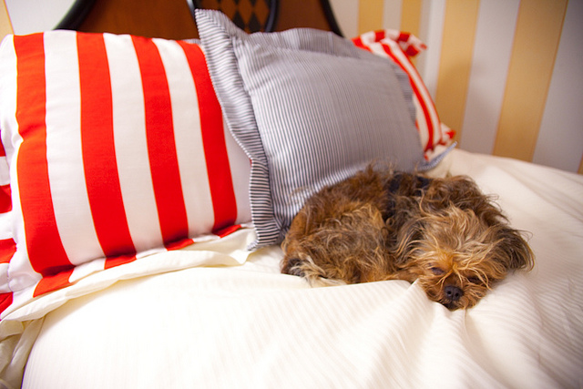 Pet-Friendly Hotels in the United States