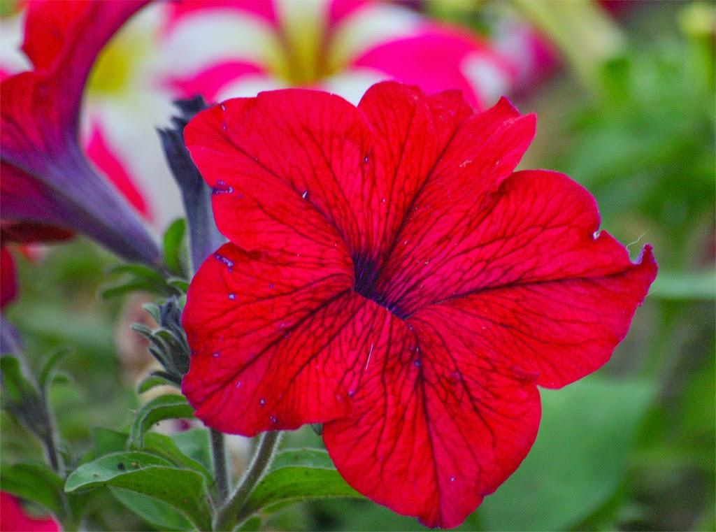 Ένα λουλούδι δώρο από την Κική του blog Εκφράσου