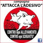Veganzo aderisce alla Campagna Attacca l'Adesivo