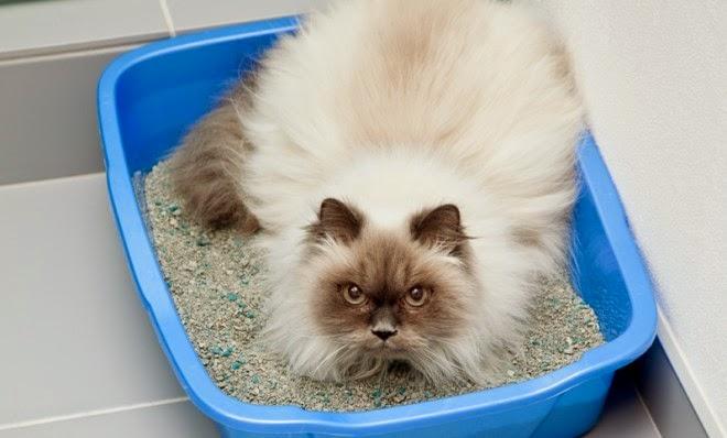 لماذا تدفن القطط بزارها more-than-just-passi