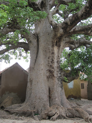 Babobab Sagrado