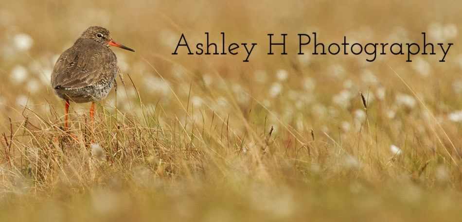 Ashley H Photography