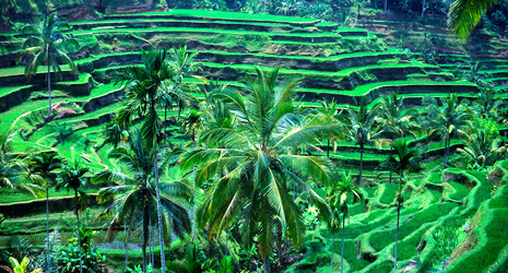 Objek Wisata Ubud Bali