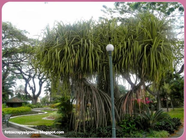 Fotos scrap y algo mas hojas en guayaquil ecuador for Como se llaman los arboles que no pierden sus hojas