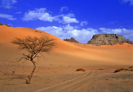 Как сделать макет пустыни фото
