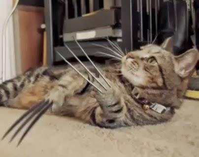 gato lobezno